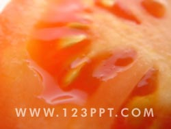 Tomato Slice Photo Image