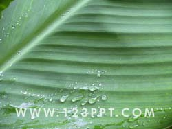 Rain on Leaf Photo Image