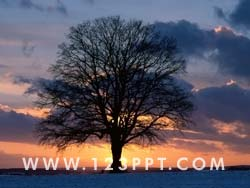 Tree Of Knowledge Photo Image