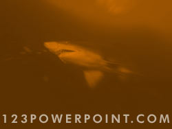 Shark powerpoint background