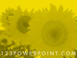 Sunflower Field powerpoint background