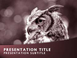 Owl Title Master slide design