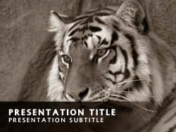 Tiger Title Master slide design